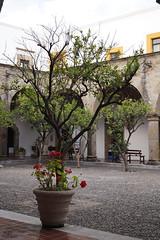 Primera (supernova.gdl.mx) Tags: planta mexico arbol arquitectura flor guadalajara jalisco patio carmen maceta empedrado exconvento virreinal