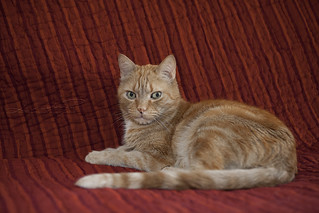 Sa majestée le chat :)