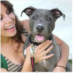SPECIAL PET ADOPTIONS RATES THIS WEEK (EASTCOBBERMagazine) Tags: pitbulls animalshelter petadoption cobbcounty pitbullmix departmentofpublicsafety cobbcountyanimalcontrolunit cobbcountyanimalshelter