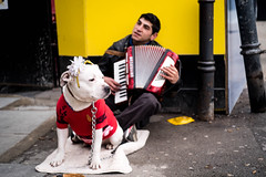 (sarashevlinphotos) Tags: street music dog colour wowiekazowie