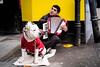 (sarashevlinphotos) Tags: street music dog colour wowiekazowie