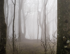 Into the misty woods (Louise Sullivan Photography) Tags: trees mist landscape woods brighton earlymorning devilsdyke southdownsnationalpark