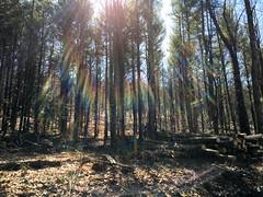 IMG_5503 (Marshen) Tags: logging skidder cornishhollow