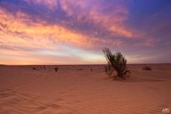 Sahara Sunset (stein.anthony) Tags: sunset sahara clouds sunrise landscape heaven sonnenuntergang sundown himmel wolken 1001nights landschaft sonnenaufgang wste blauestunde