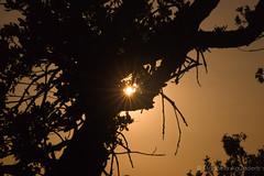 1-Contraluz-Maana de nuevo saldr el sol #atardecer #sunset #sol #sun #rayosdesol #sunrays #rbol #tree #cielo #sky #heaven #2016 #mlaga #andaluca #espaa #spain #love #contraluz #backlighting #naturaleza #nature #paisaje #landscape #photography #photo (Manuela Aguadero) Tags: sunset sky espaa naturaleza sun tree love sol nature clouds contraluz landscape atardecer photography andaluca spain heaven photographer paisaje cielo nubes rbol sunrays mlaga backlighting rayosdesol 2016 sonyalpha sonyalpha350 sonya350 alpha350