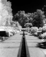 Botanic Gardens (polyglot) Tags: 120 adelaide botanicgardens filmscan rz67 xtol r72 jobo ir820 12073209jpg