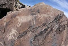 Petroglyphs / Blackrock Well Site (Ron Wolf) Tags: california archaeology nationalpark nativeamerican petroglyph anthropology shoshone rockart zoomorph bighornsheep deathvalleynationalpark coso numic