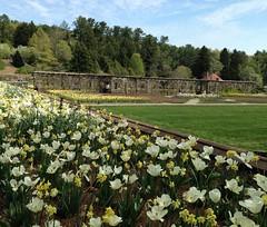 Across Biltmore Gardens (mystuart) Tags: park flowers trees museum garden landscape botanical nc spring tour asheville lawn visit u biltmore lattice pergola