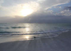 A Moment of Wonder (pattyannemac) Tags: sunset sea clouds wonder outside alone peace seagull grace serenity moment wonderment