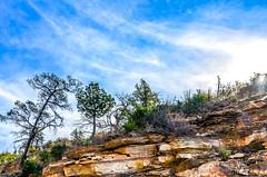 "Sunrise, high up at the ""tree line"".... (tomk630) Tags: arizona sky usa tree nature colors sunrise line moutains"