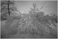 MARCH 2016  NM1_8397_011200-2 (Nick and Karen Munroe) Tags: winter blackandwhite bw snow storm ice weather fence baseball munroe diamond icestorm bandw snowfall wintertrees icesculptures icecrystals winterstorm nickandkaren 1424 blackandwhitewinter weatherevent nikon1424f28 munroephotography munroedesignsphotography munroedesigns karenick karenick23 nickmunroe nikond750 nickandkarenmunroe karenandnickmunroe karenmunroe