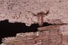 DSC_2287.jpg (hankplank) Tags: arachnid caribbean statia netherlandsantilles pseudoscorpion windwardislands leewardislands lesserantilles sinteustatius thequill pseudoscorpionida paratemnoides markyokoyama coucharmountaintrail pachyolpiumconfusum