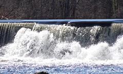P1190770 (Rimager) Tags: water river waterfall dam fallingwater