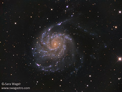 M101 The Pinwheel galaxy (Sara Wager (www.swagastro.com)) Tags: sky night stars star skies darkness space astro galaxy nebula astrophotography astronomy nightsky universe astronomia cosmos constellation deepspace cosmology m101 qsi dso nebulae interstellar nebulosity pinwheelgalaxy mesu astrodon qsi683 kaf8300 sarawager deepskydso swagastro mesu200 wwwswagastrocom
