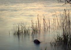 Perpetual motion (eddieELM) Tags: longexposure ireland lake stone canon reeds dusk minimal motionblur shore cavan 1740 irlanda irlande lessismore 600d shercock leefilter eos600d rebelt3i kissx5 littlestopper eddieelm