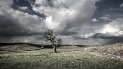 Partly cloudy (drstar.) Tags: sky sunlight tree clouds nikon flickr rainy fields partlycloudy d610 lonelytrees flickrturkey