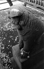 (dignifying sound) (Dinasty_Oomae) Tags: blackandwhite monochrome blackwhite shrine chiba  komainu exakta ichikawa      ihagee  hiejinja exaktavarex    vx