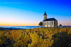 Church and vineyards of Saint Laurent d'Oingt during sunrise, Beaujolais, France (Gael F. Photography) Tags: morning autumn sunset sky france mountains alps church sunrise skyscape french landscape outside countryside twilight colorful europe village wine hill farming harvest vine bluesky vineyards fields beaujolais colored redwine agriculture whitewine grape saintlaurent baste picking goldenhour gloaming rhone harvesting yellowleaves gamay rhonealpes aoc montmelas oingt beaujolaisvillage frontenas