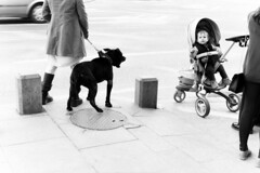 (Adrian Alexe) Tags: street blackandwhite dog monochrome car wheel blackwhite toddler child candid wheels streetphotography grayscale buggy decisivemoment decisive
