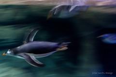 valencia 2016-93 (hiroke636) Tags: valencia mar peces oceano oceanografic