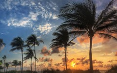 (Andy Royston / Ft Lauderdale Sun) Tags: photostream iphone6sbackcamera415mmf22