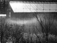 A good soaking (pilechko) Tags: blackandwhite monochrome pennsylvania nursery sprinkler newhope buckscounty watering