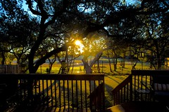Our source code (malcolmharris64) Tags: leica green sunrise austin landscape belt backyard texas view m240