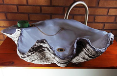 Grey Giant Clam Shell SINK 1 (LittleGems AR) Tags: ocean sea sculpture sun beach home statue giant bathroom shower aquarium soap sand bath sink natural contemporary unique decorative shell craft style toilet towel clam basin special shampoo taps wash ornament gift seashell pearl nautical reef decor spa luxury opulent fossils oneoff clamshell mollusks cloakroom bespoke tridacna sculpt crafted gigas facetowel