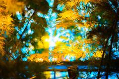 The street is illuminated. (Mototaka Tsujima) Tags: christmas street winter japan tokyo nikon f14 日本 roppongi 東京 58mm 冬 クリスマス nokton 六本木 d610 ストリート ニコン ミッドタウン ノクトン