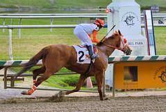 2015-12-13 (83) r6 Jevian Toledo on #2 Classic Wildcat (JLeeFleenor) Tags: photos photography md marylandracing marylandhorseracing laurelpark jockey   jinete  dokej jocheu  jquei okej kilparatsastaja rennreiter fantino    jokey ngi horses thoroughbreds equine equestrian cheval cavalo cavallo cavall caballo pferd paard perd hevonen hest hestur cal kon konj beygir capall ceffyl cuddy yarraman faras alogo soos kuda uma pfeerd koin    hst     ko  maryland