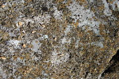 Stone texture 3 (DapperDaphne) Tags: road wood winter dog snow tree texture ice broken water pool field grass stone pine forest puppy jack puddle foot moss paw woods melting branch crystal outdoor path branches russel grain canine trail terrier fabric pineneedles cedar prints snowing melt doggy pup pawprints sap domesticated snowed runoff canislupus