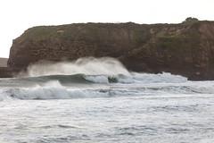 Ano Nuevo State Park-7961 ( / Jiayin Ma) Tags: california park beach water 1 sand state wave route ao ano nuevo seaocean