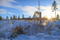 Snow landscape (Johan Fredlund) Tags: sun snow tree nature sunshine canon landscape dc still sweden north sigma os adobe 7d sverige scandinavia 1850 lightroom beutiful sunscape stillhet lr6 fredom f2845 canonpower becausewelovesweden johanfredlundcom