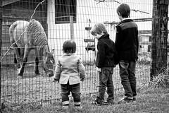 IMG_5087 (La.po.) Tags: bambini cavallo bianconero schiena bimbi tenerezza