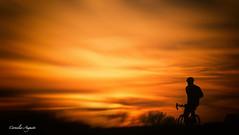 Wie viel Musik.. (cornelia_auguste) Tags: abendstimmung abenddämmerung abendlicht abendstimme rheinaue düsseldorf fahrrad fahrradfahrer geniessen genuss emotion lichtstimmung bikerider outdoor sonnenuntergang himmel dämmerung wolken