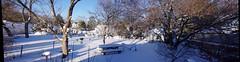 January 2016 Blizzard (C r u s a d e r) Tags: winter snow storm blanket snowfall wonderland blizzard ptgui pentaxk3 january2016
