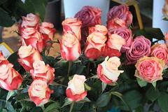 rosas (javierortegaferrandez) Tags: planta flor ramo