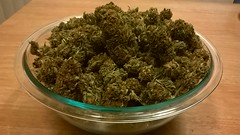 Bowl Of Weedies (Nineteen Seventy Seven) Tags: oregon weed pacific northwest outdoor smoke hard 420 patient medical pot rocker program marijuana tragic pnw cannabis chronic sativa dank strain southernoregon indica weedies ors ommp 475346 475300
