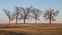 Five Trees (myoldpostcards) Tags: road winter light sunset sky sunlight nature field rural america season landscape illinois farm country farming goldenhour centralillinois sangamoncounty goldentrees fivetrees myoldpostcards vonliski campbellcemetery