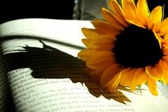 Summer Reading (moniquef123) Tags: summer stilllife flower reading book words petals pages sunflower