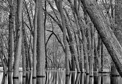 Spring Overflow (Fuhrtographer........Weekend warrior for now, extr) Tags: blackandwhite wisconsin wi lakepepin mississippiriverbottoms canon6d tiffanybottoms