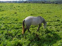 Voltaram (LuPan59) Tags: oeiras cavalos lupan59