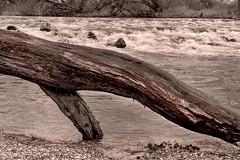 Landschaften (siggi.martin) Tags: trees tree water river germany bayern deutschland bavaria wasser wasserfall driftwood trunk bume baum stamm treibholz flus watercascade
