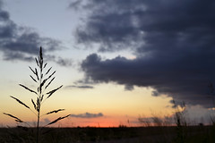 Algun atardecer (regojoagustina) Tags: sky cloud naturaleza sun green nature atardecer nikon cielo nubes campo crepusculo