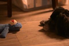 (Brian McGloin) Tags: dog austin blackdog shady femaledog cockermix