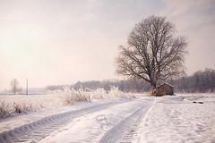 Winter dawn (Carlo Milani) Tags: landscape artistic fineart artisticphotos
