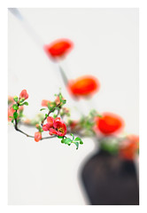Der Bltenzweig (memories-in-motion) Tags: flower detail rot canon cherry eos iso800 dof blossom bokeh ikebana fineart 85mm karte card vase minimalism f18 simply makro blte komposition kirsch kirschblte frhjahr reduziert schlicht 11250sec ef85mmf12liiusm bltenzweig brancj canoneos5dmarkiii