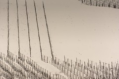 Geometries in the snow (GP Camera) Tags: winter bw snow monochrome field lines landscape monocromo countryside quiet calm riposo textures campagna piemonte vineyards silence neve campo rest vignetting inverno calma paesaggio biancoenero silenzio monferrato linee quiete allaperto vigneti trame minimalphoto fotominimale nikond7100 nikonafsdx55300mmf4556gedvr