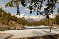 _1190517.jpg (Bucky-D) Tags: ca canada mountains rockies alberta banff bowriver bowfalls banffnationalpark canadianrockies fz1000