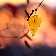 *** (knowhopeinme) Tags: autumn light red orange color fall nature colorful dof bokeh softness depthoffield goldenhour naturephotography beautyinnature